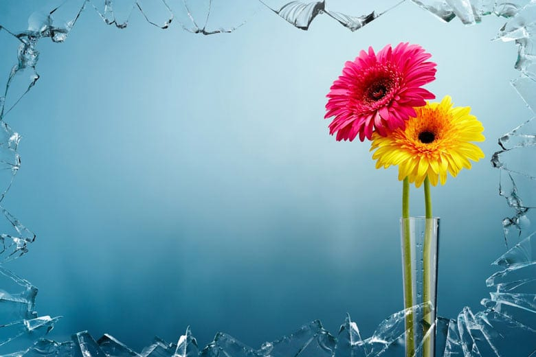 two flowers through a frame of shattered glass